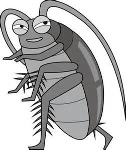 【恐怖】ゴキブリは雄の存在なしで繁殖する!?雌3匹以上で単為生殖促進とか怖すぎるお話題に!