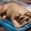「食べられないゼリー」の犬ゼリーが超話題!一日300個も売れる理由とは!?