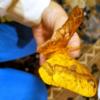 【画像】岡山理大生物地球学科の安達由莉さん、「雌雄型」を奇跡的に発見!虫を愛する女子高生が話題!!